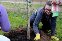 Carbon Fund Tree Planting - February 28, 2015